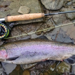 steelhead on the fly rod